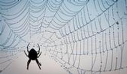 123-p-spin-spinneweb-170-1